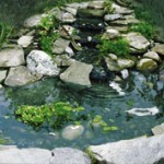 Build A Garden Pond In Your Garden